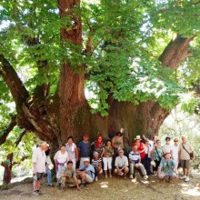 Visit Holy Chestnut Tree