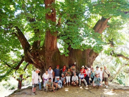 Holy Chestnut Tree Tour