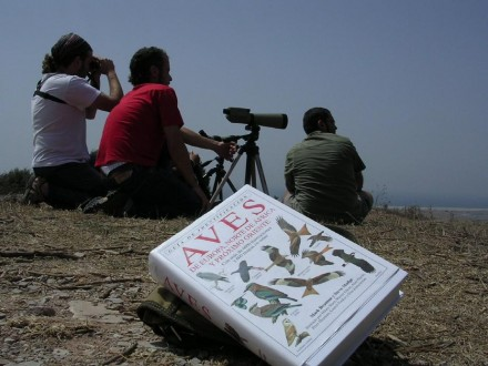 Birdwatching Marbella