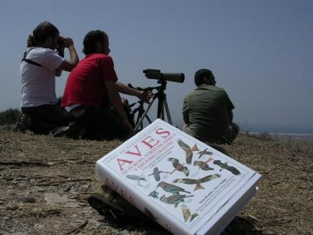 Birdwatching Marbella